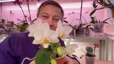 температура для орхидей зимой