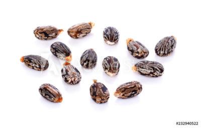 как собрать семена клещевины