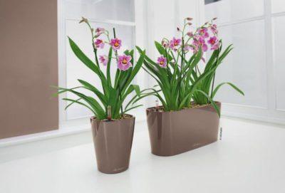 какой горшок нужен для орхидеи