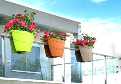 цветы для посадки на балконе