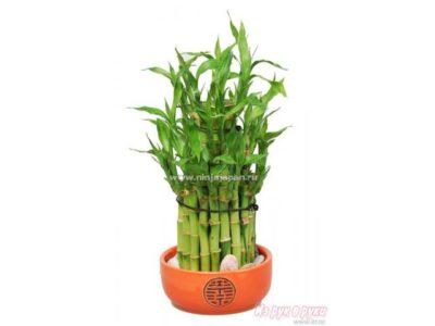 как обрезать бамбук