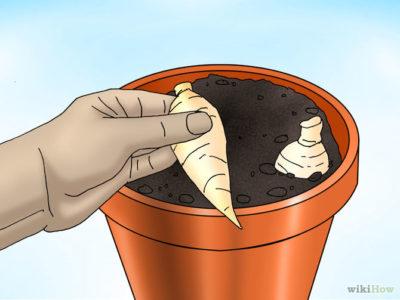 можно ли георгины не выкапывать на зиму