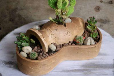 горшки для кактусов