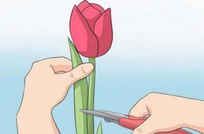 можно ли сажать тюльпаны в октябре при нулевой температуре