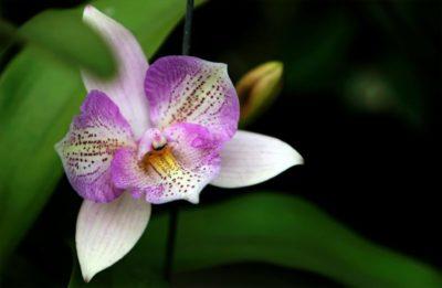 как растут орхидеи в природе