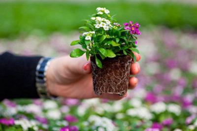 цветы посадка и уход