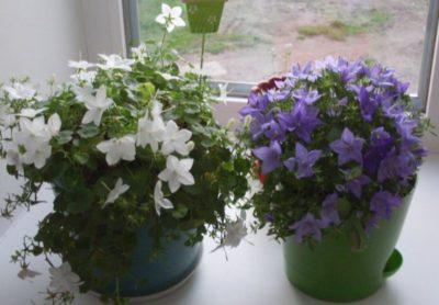 какие домашние цветы можно вырастить из семян