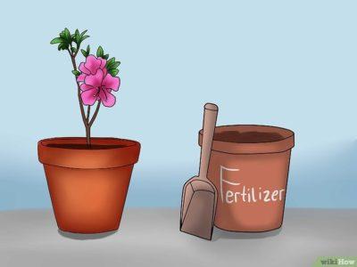 кислая почва для комнатных растений