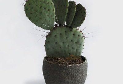 как посадить кактус