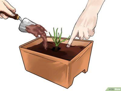 почва для посадки тюльпанов