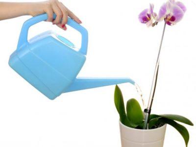 какой водой поливать орхидею