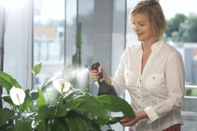 комнатные растения как ухаживать