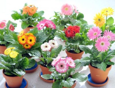 цветы из семян на подоконнике