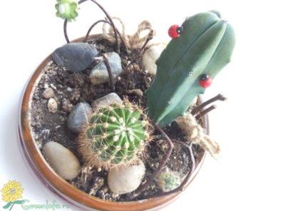 как ухаживать за кактусом