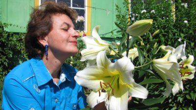 лилии в сибири посадка и уход