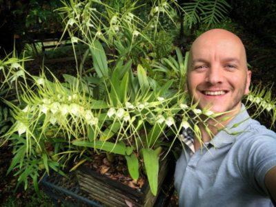 орхидея брассия уход