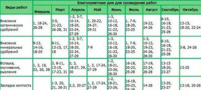 календарь пересадки фиалок
