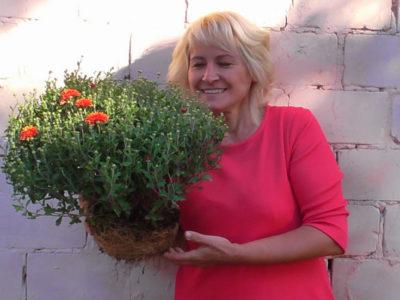 хризантема шаровидная посадка и уход