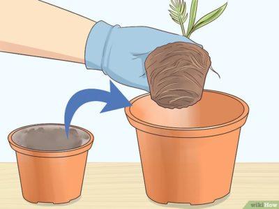 как пересаживать цветы из горшка в горшок