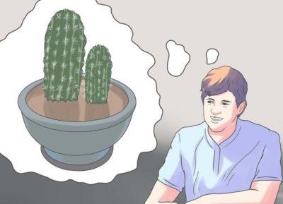 как пересадить кактус