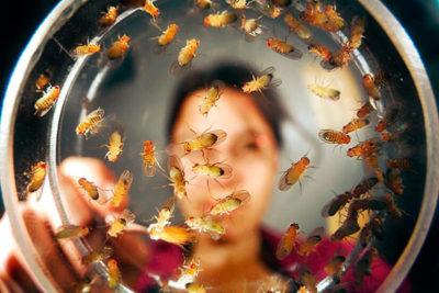 мошки в земле комнатных растений как избавиться