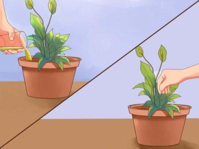 как размножаются комнатные растения