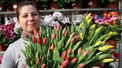сколько растут тюльпаны