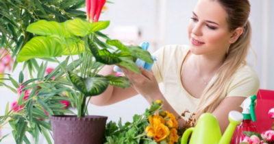 пересадка комнатных растений в декабре