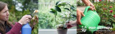 какие удобрения вносить при посадке роз