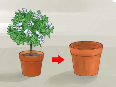 когда пересаживать комнатные растения