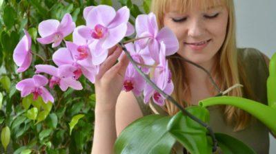 орхидея в воде уход