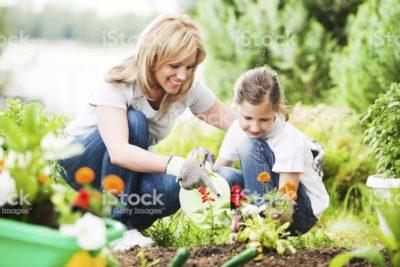 как правильно сажать цветы
