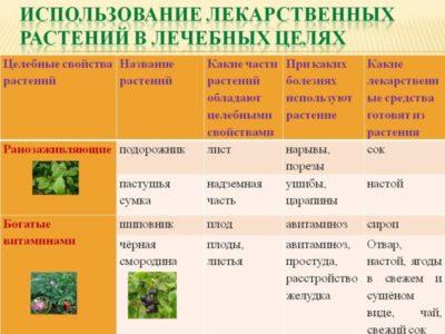 виды растений список