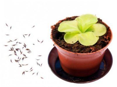 какие цветы легко вырастить из семян