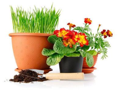 когда можно пересаживать комнатные цветы