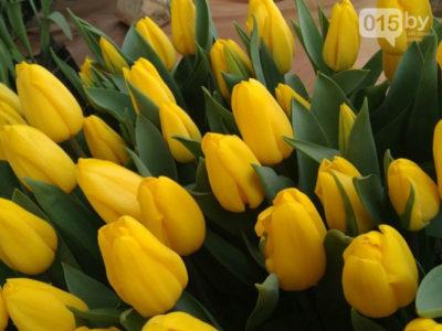 сорт тюльпана барселона