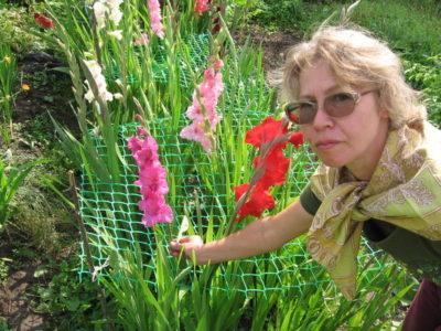 посадка гладиолусов весной на рассаду