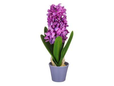 гиацинт сколько раз цветет